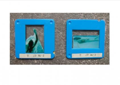 http://www.alwenzel.de/files/gimgs/th-29_schwimmbad_3.jpg
